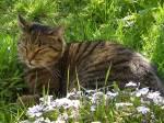 Die Katz im Gras