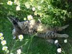 Im Blumenbeet