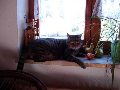 Katze auf dem Fensterbrett