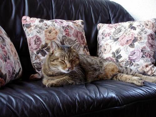 Die Katz auf dem Sofa